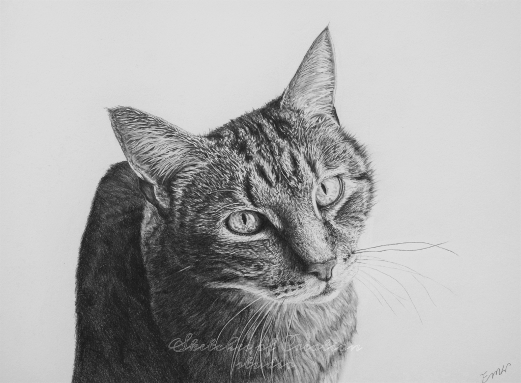 """""""Tiger"""" a tabby cat drawing. 9x12"""" Completed June 2019"""