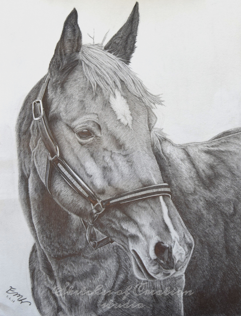 """""""Breezy"""" a horse drawing. 9x12"""" Completed August 2018"""
