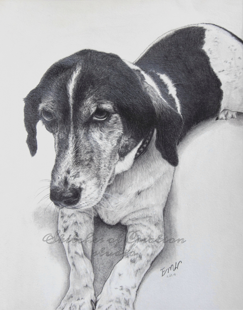 """""""Buddy"""" a drawing of a beagle and hound mix. 8x10"""" Completed August 2018"""
