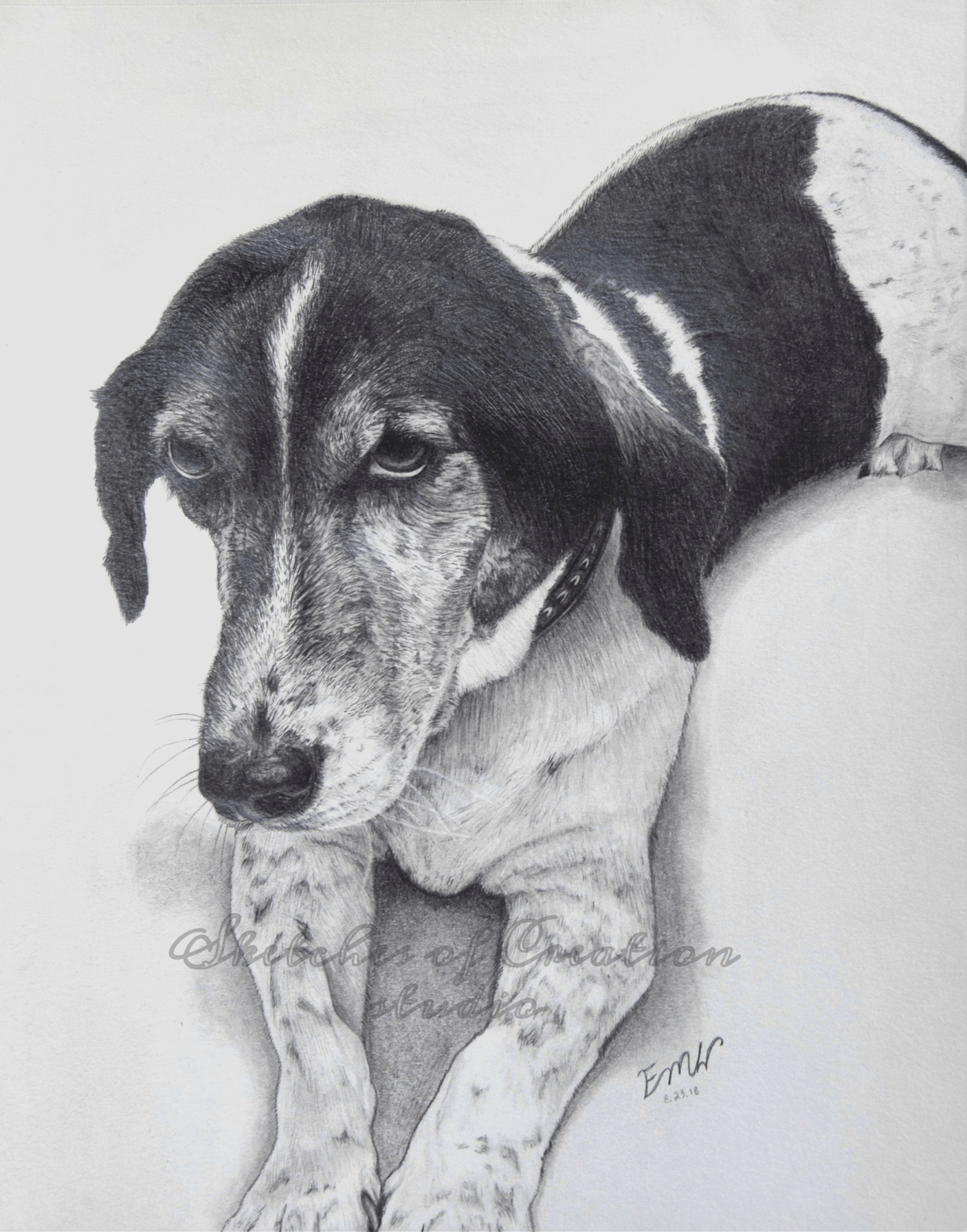 'Buddy' a drawing of a beagle and hound mix. 8x10 inches. Completed August 2018