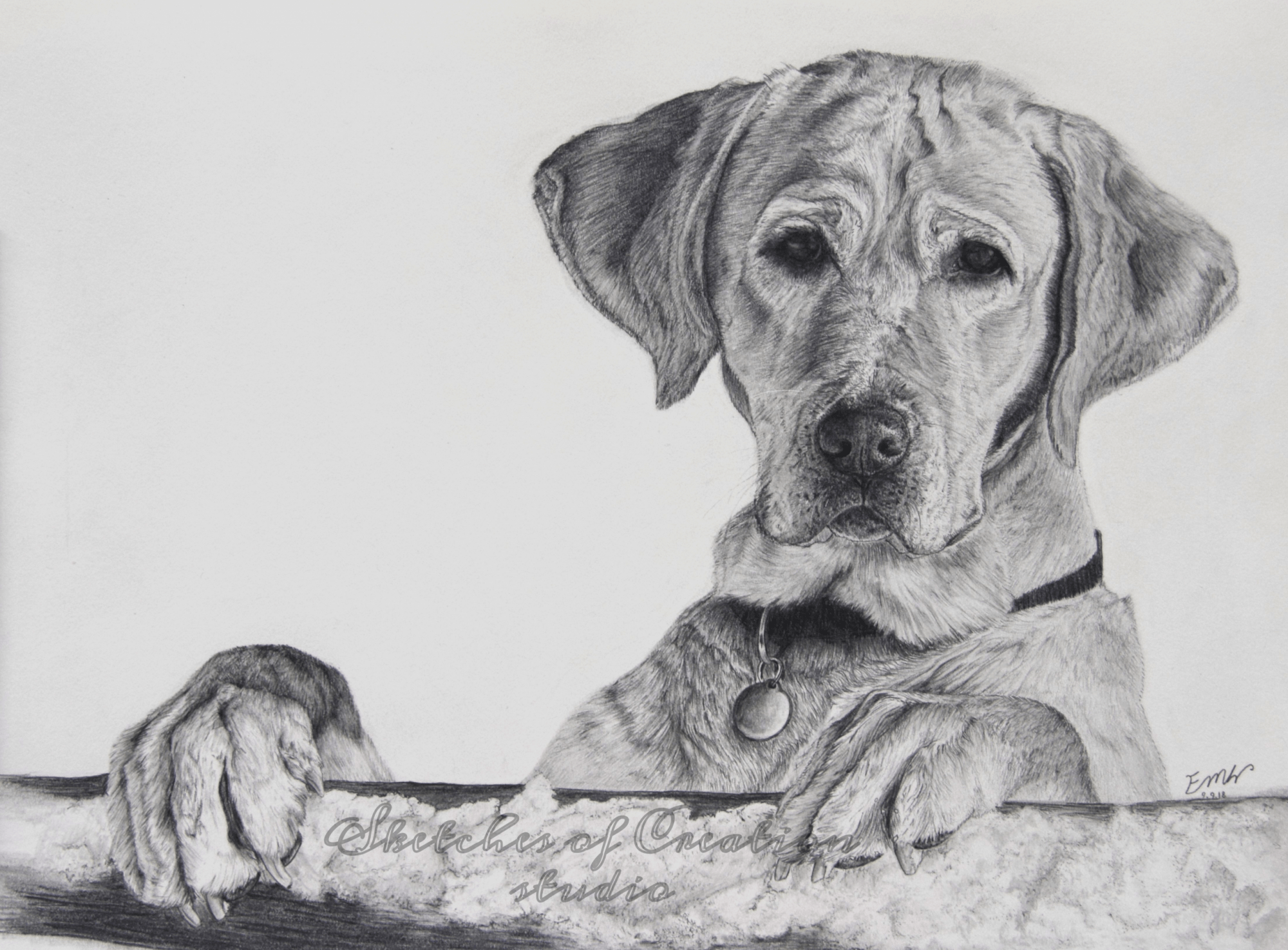 'Eric' a drawing of a yellow Labrador. 9x12 inches. Completed September 2018