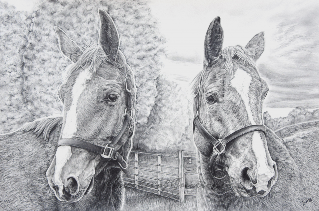 """""""Beste Guess and  Fabuleste"""" a drawing of two dressage show horses. 12x18"""" Completed January 2019"""