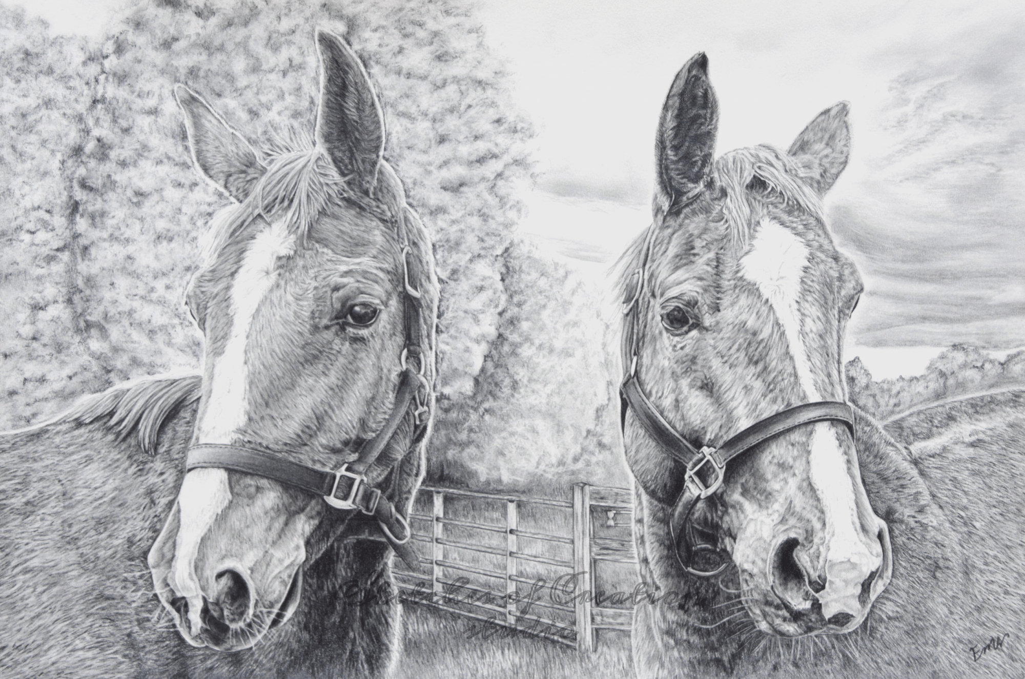 'Beste Guess and Fabuleste' a drawing of two dressage show horses. 12x18 inches. Completed January 2019