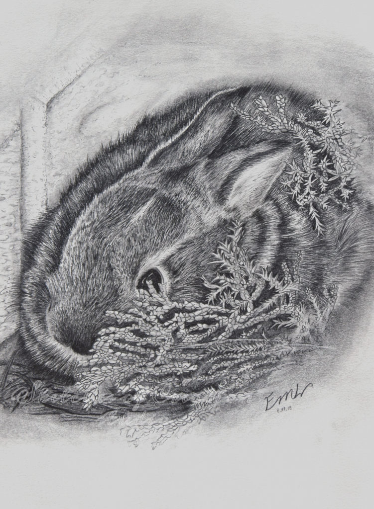 """""""Hiding"""" a baby bunny drawing. 6x8"""" Completed August 2018"""