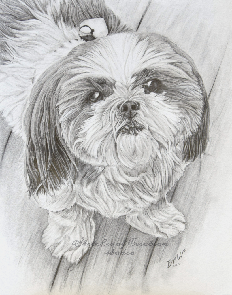 """""""Macy"""" a shih-tzu drawing. 8x10"""" Completed October 2018"""