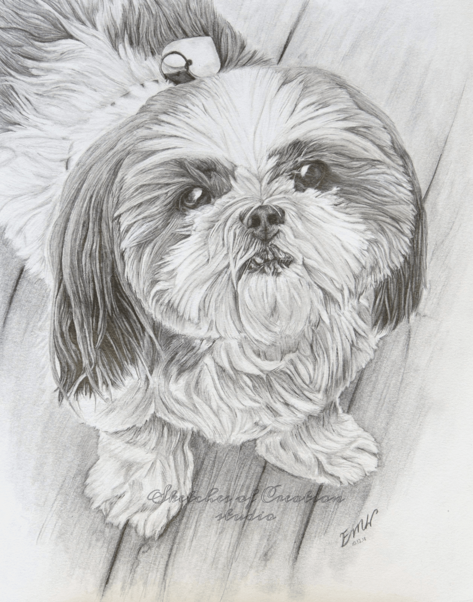 'Macy' a drawing of a shih-tzu. 8x10 inches. Completed October 2018