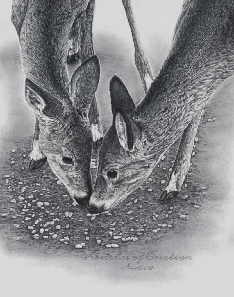 """""""Siblings"""" a drawing of two deer eating together. 11x14"""" Completed June 2019"""
