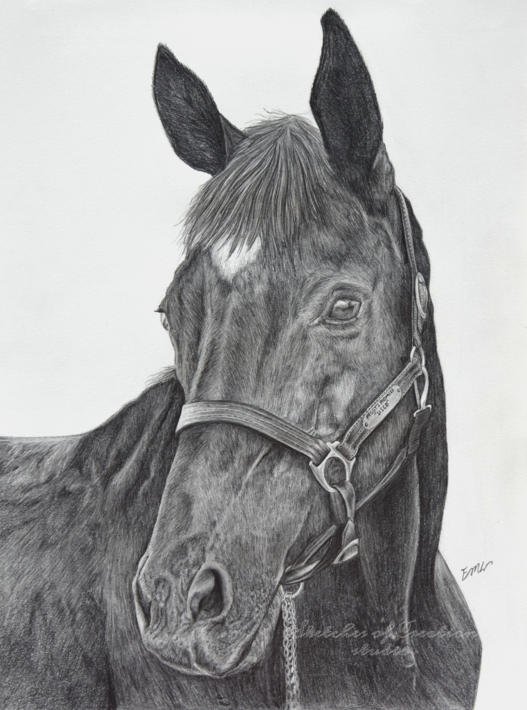 """""""Sisco"""" a horse drawing. 9x12"""" Completed September 2018"""