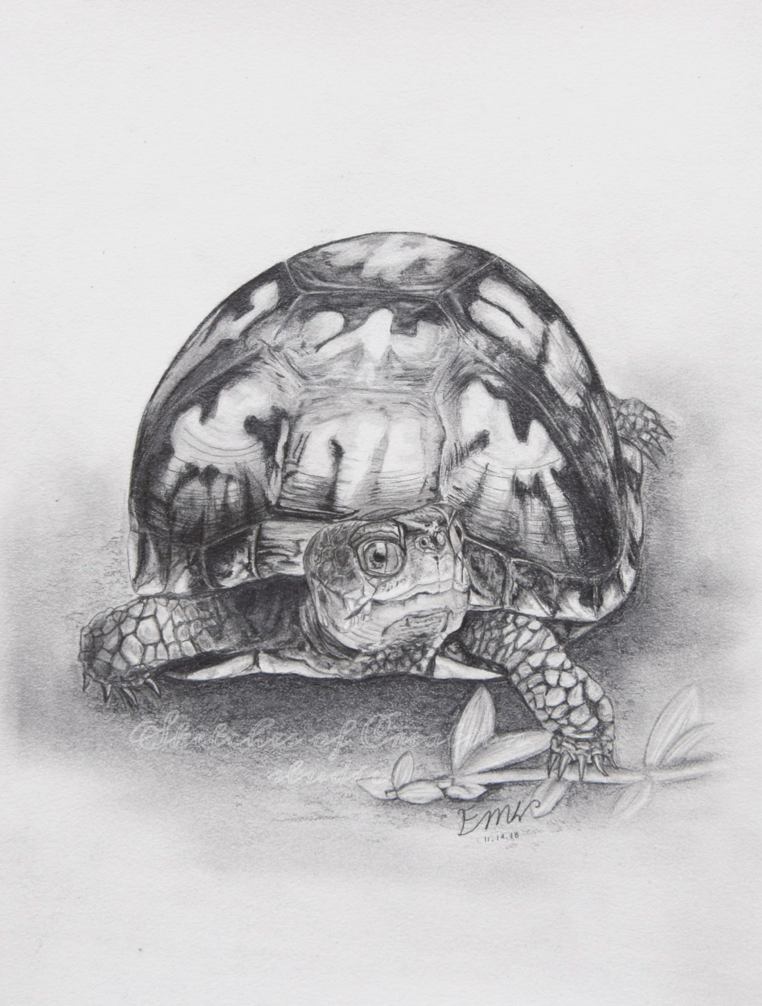 """Slow Going"" an Eastern box turtle drawing. 6x8"" Completed November 2018"