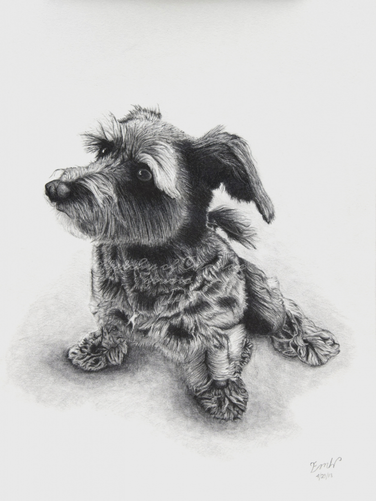 """""""Susie"""" a drawing of a terrier mix. 9x12"""" Completed April 2018"""