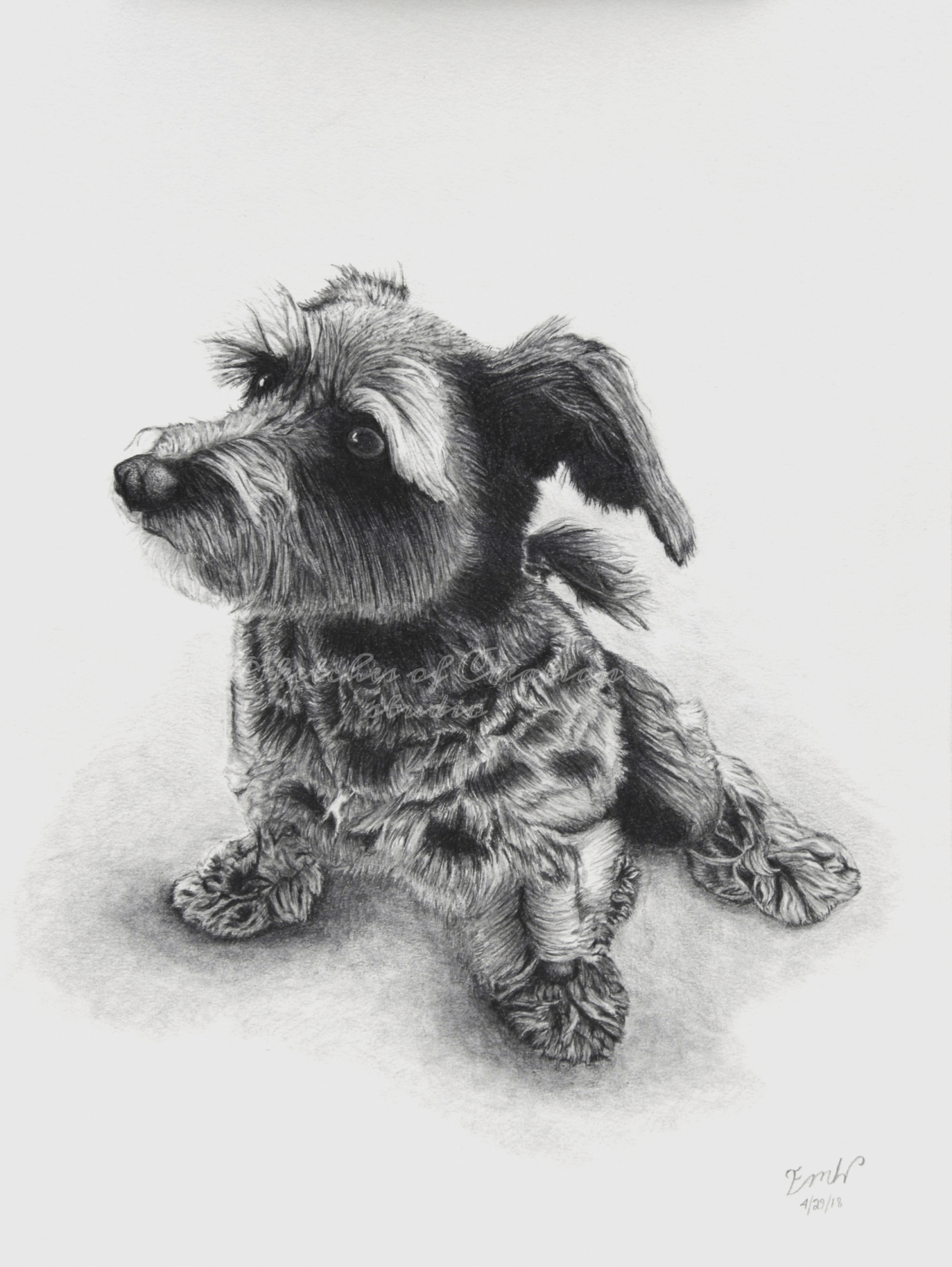 'Susie' a drawing of a terrier mix. 9x12 inches. Completed April 2018