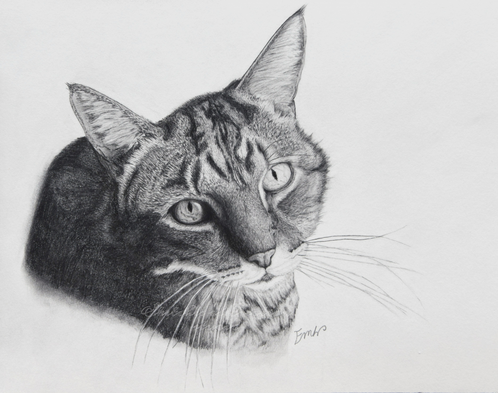 """""""Tiger"""" my old drawing of a tabby cat. 9x12"""" Completed February 2018"""