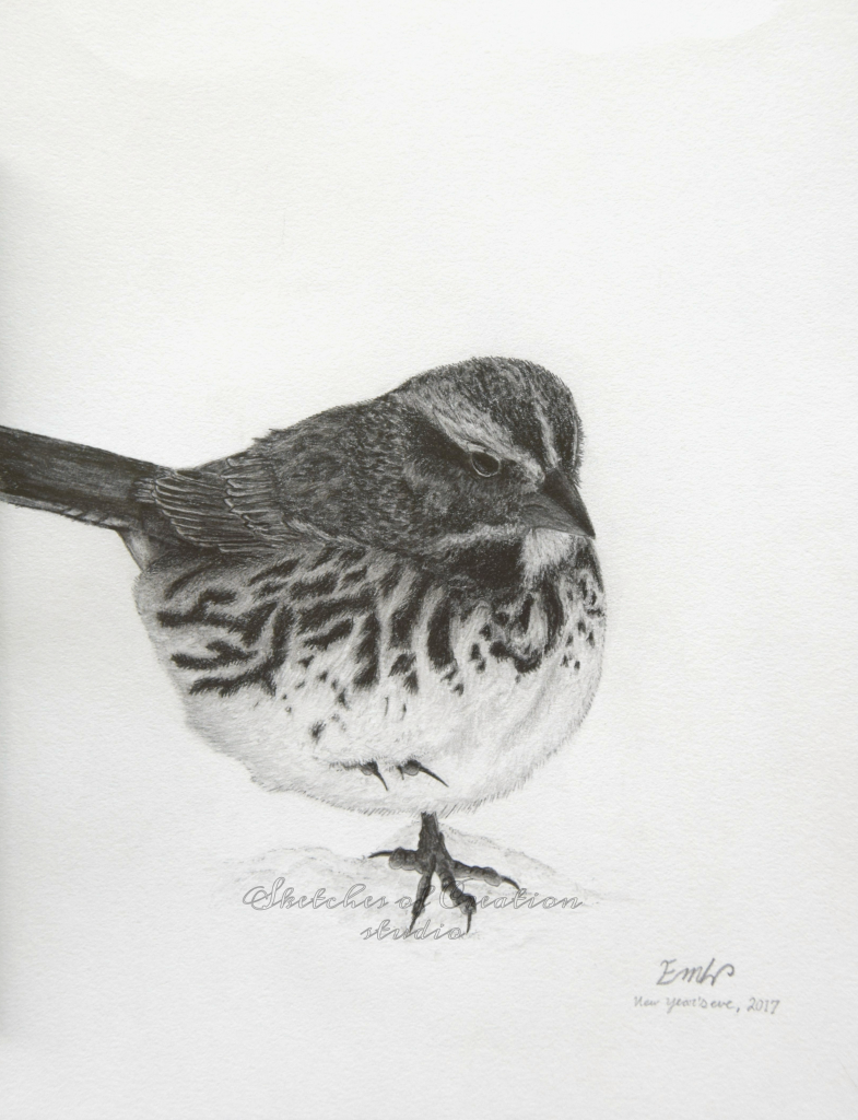 """""""White-throated Sparrow"""" a white-throated sparrow drawing. 6x8"""" Completed December 2017"""