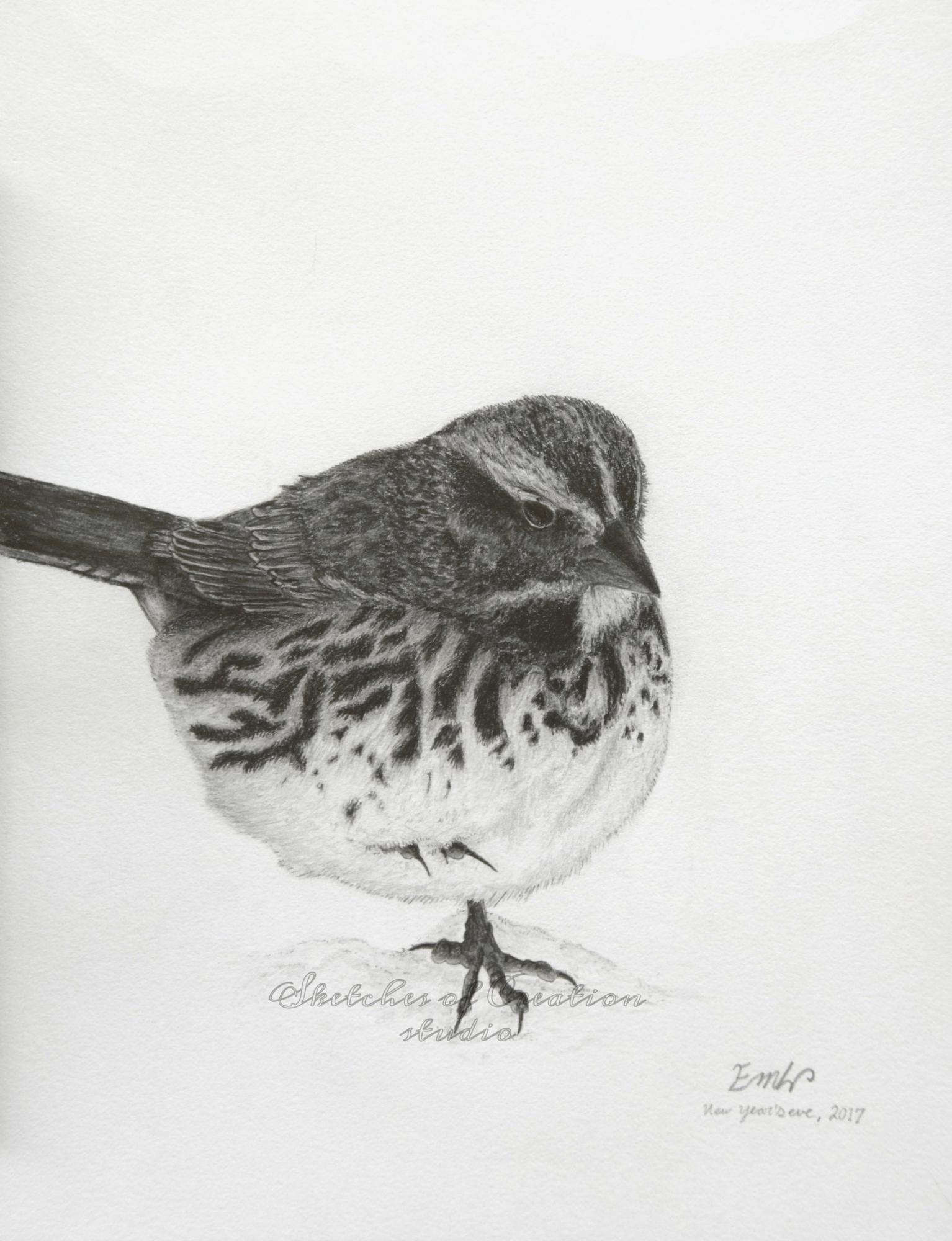 'Song Sparrow' a drawing of a song sparrow in the snow. 6x8 inches. Completed December 2017