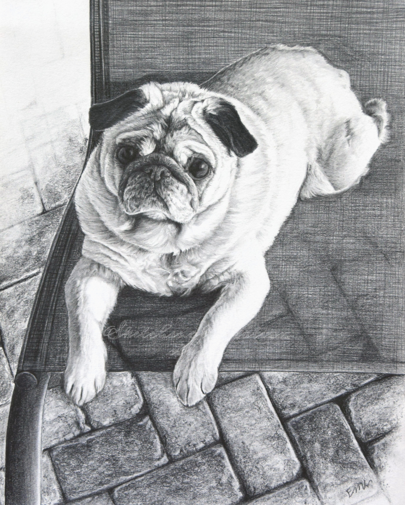 """""""Chumba"""" a Chinese Pug drawing. 8x10"""" Completed August 2019"""