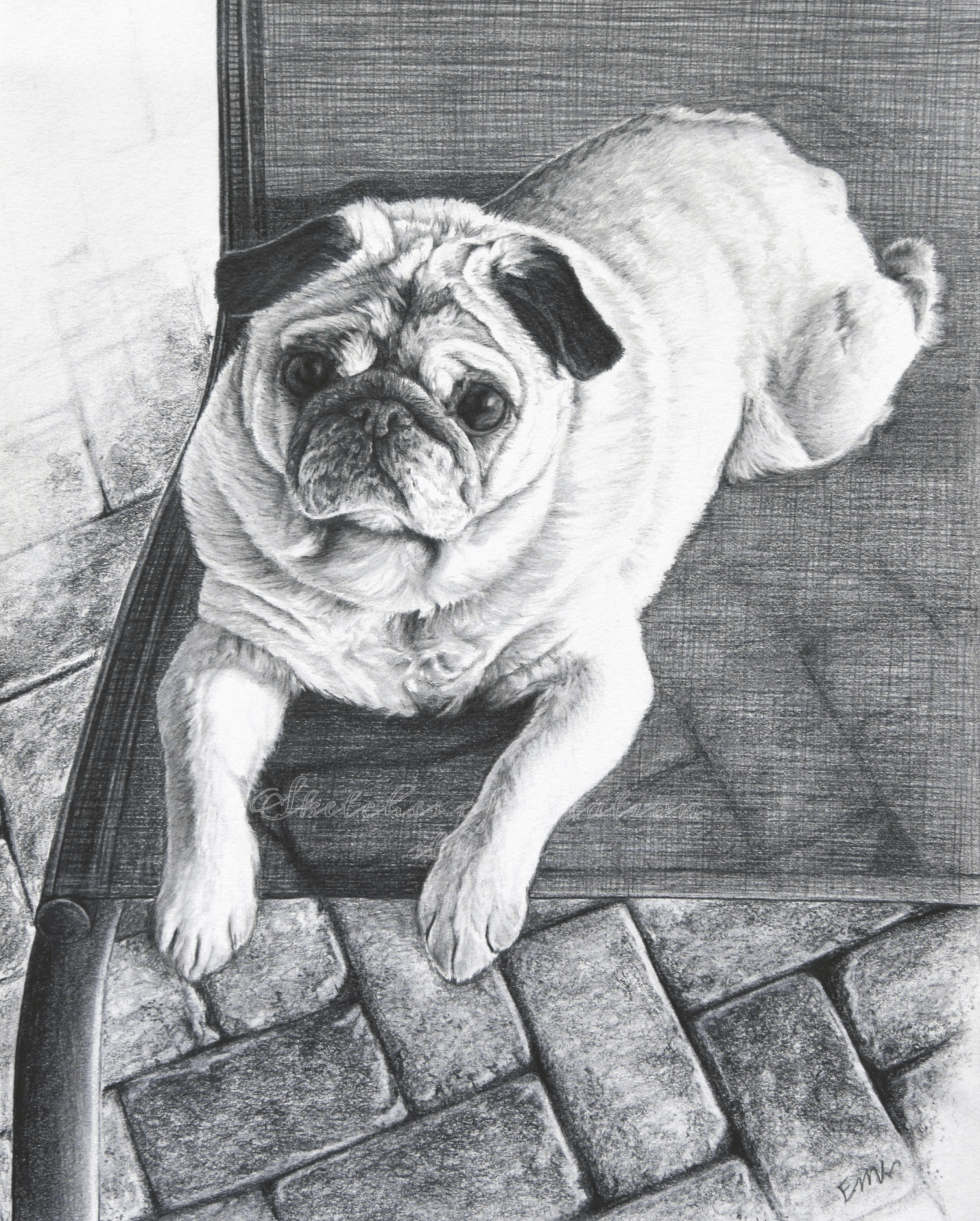 'Chumba' a drawing of a Chinese Pug. 8x10 inches. Completed August 2019