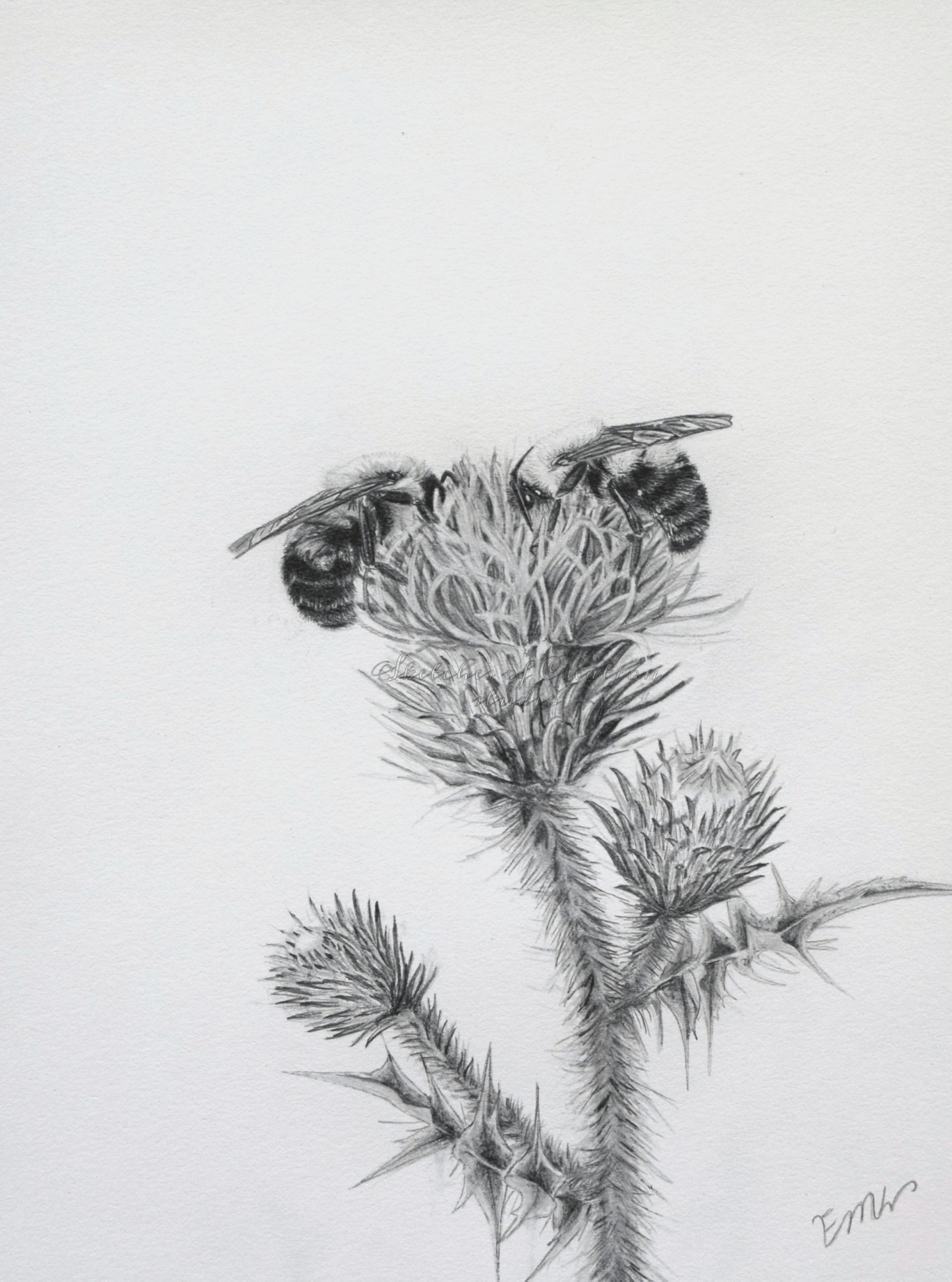 'A Table for Two' a drawing of two bees on a thistle flower. 6x8 inches. Completed August 2019