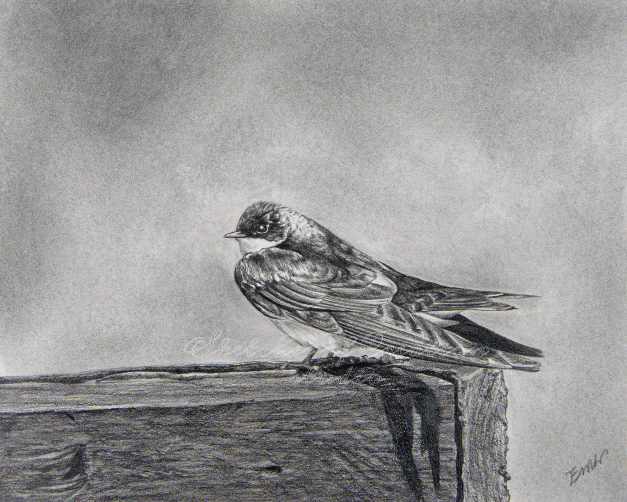 'Tree Swallow' a drawing of a tree swallow on a fence. 8x10 inches. Completed February 2020