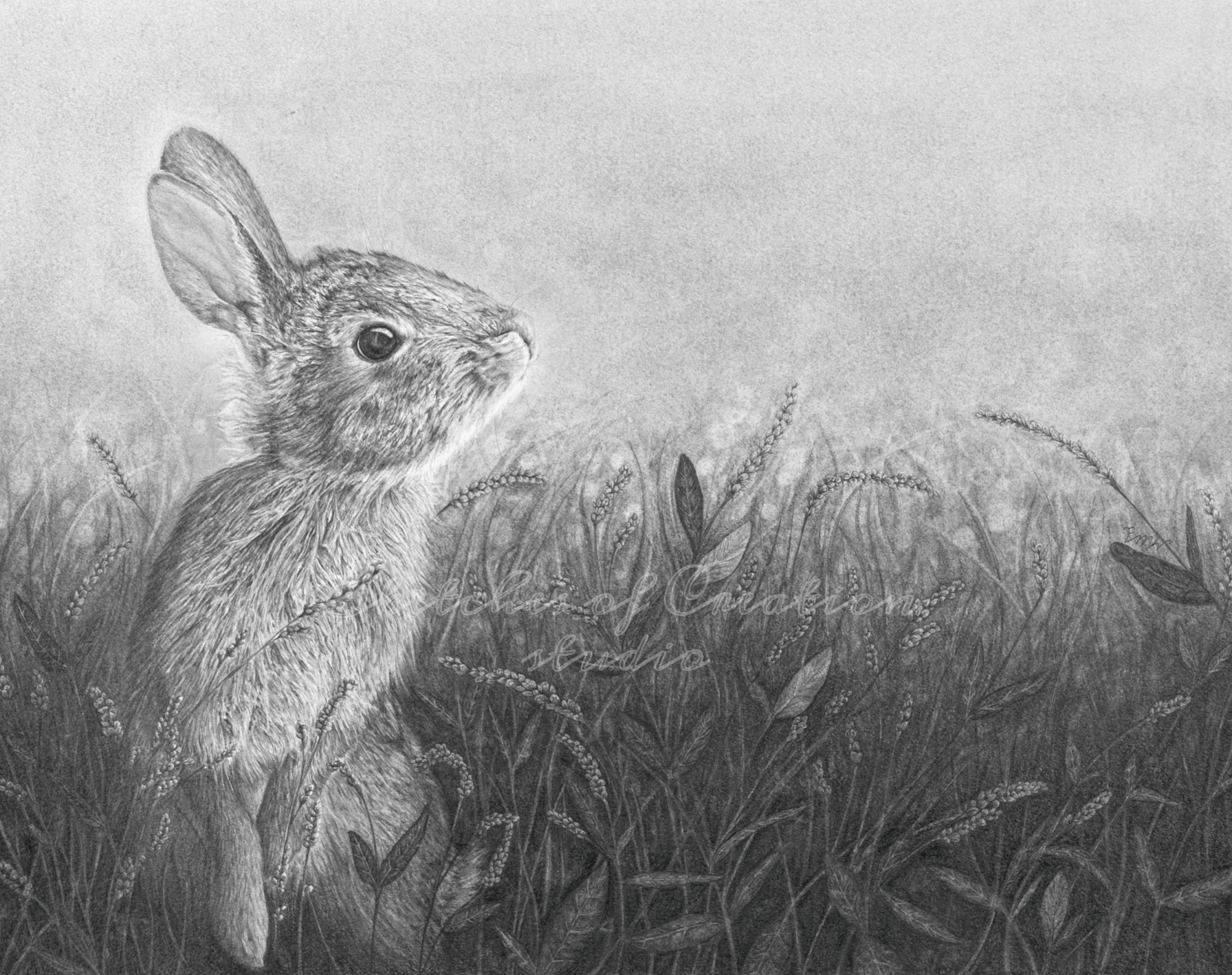 'Curious' a drawing of a Rabbit looking up in a flied of Lady's Thumb. 11x14 inches. Completed July 2020
