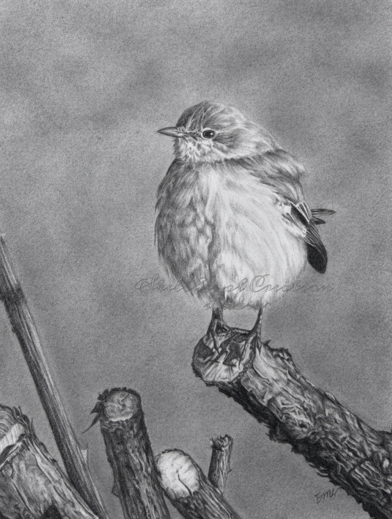 'Perching' a drawing of a Mockingbird perched atop a cut branch. 6x8 inches. Completed August 2020