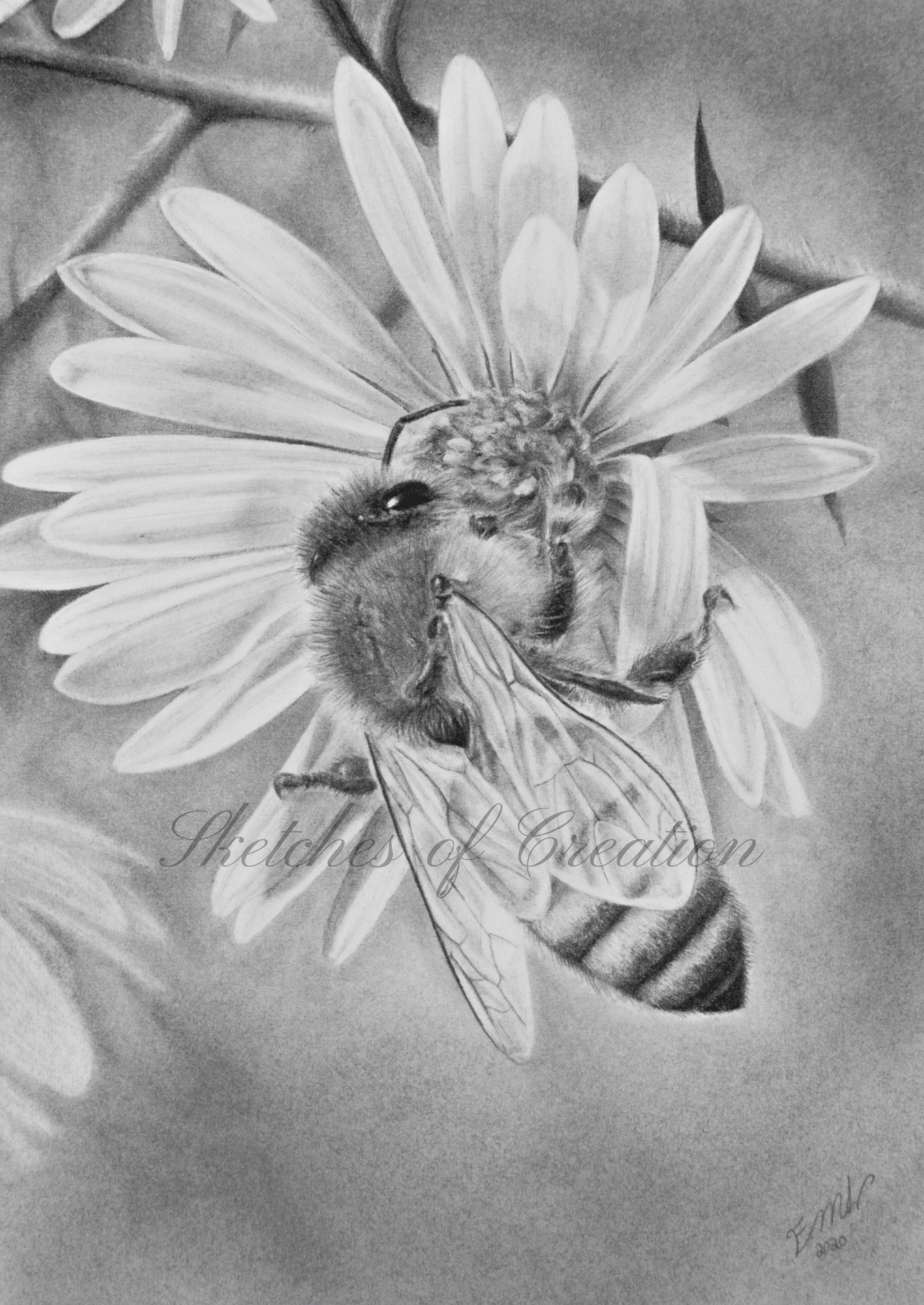 'Honey Bee' a drawing of a honey bee on a flower. 5x7 inches. Completed October 2020