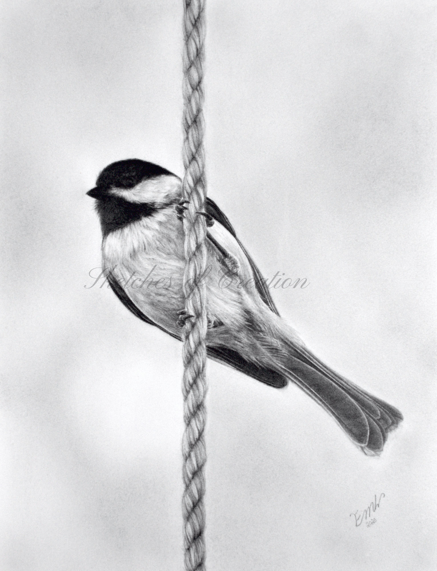 'Lookout' a drawing of a chickadee on a rope. 6x8 inches. Completed November 2020