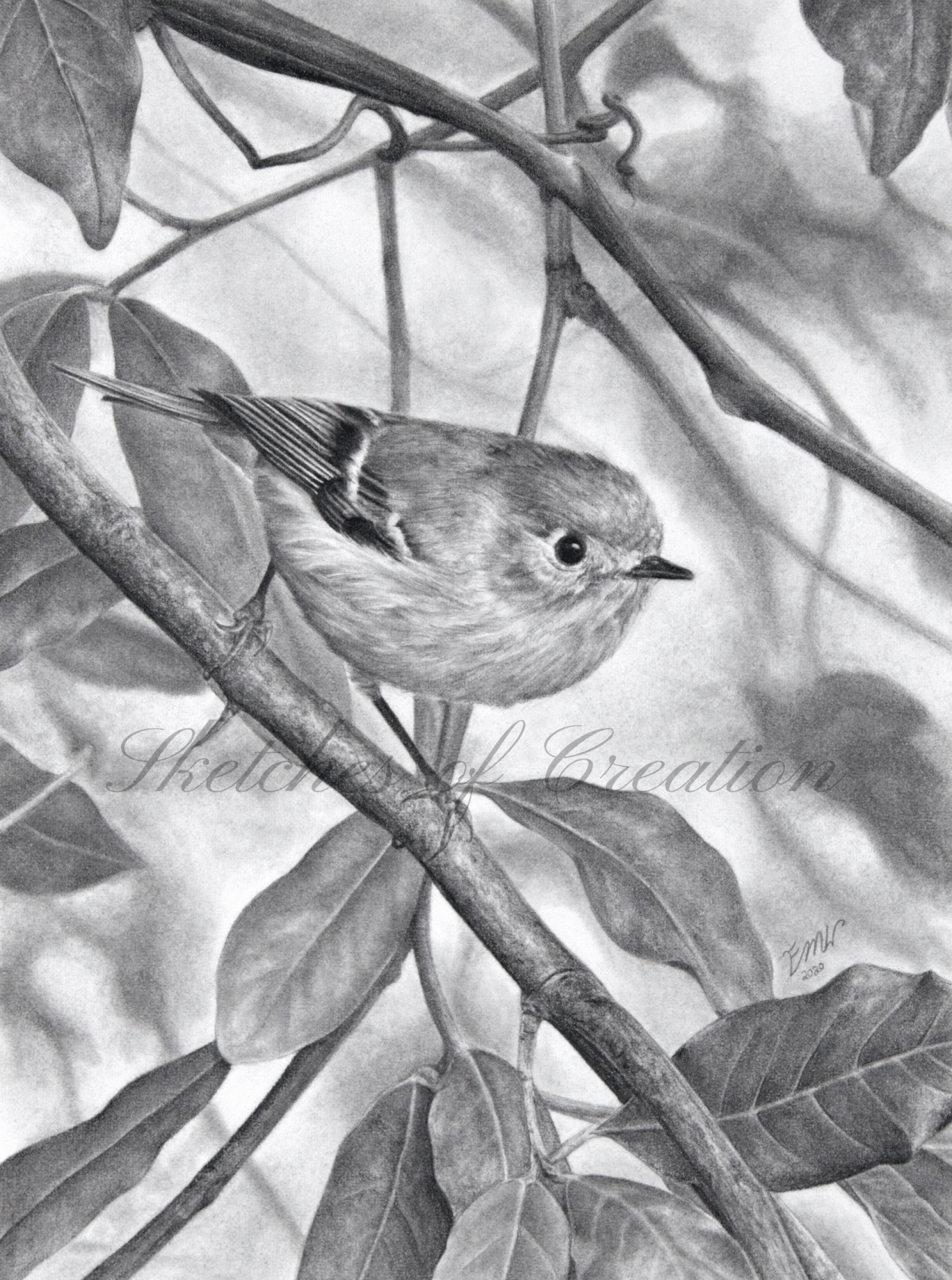 'Ruby-crowned Kinglet' a drawing of a Ruby-crowned Kinglet among leaves. 6x8 inches. Completed November 2020