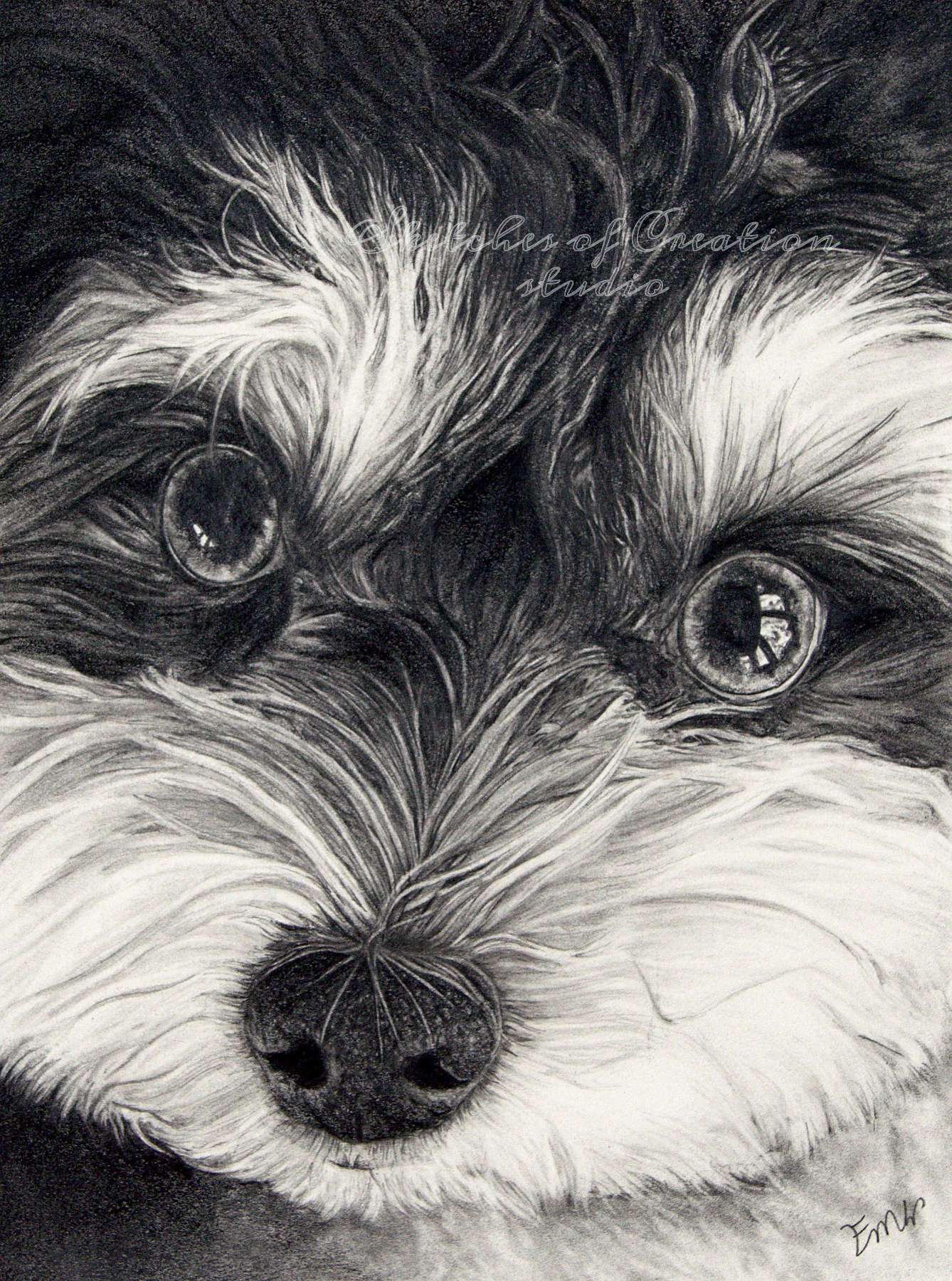 'Bella' a drawing of a havanese. 6x8 inches. Completed March 2020