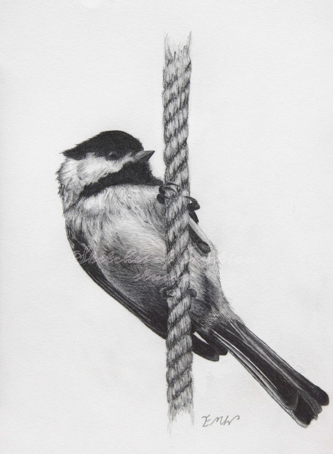 'Chickadee' a drawing of a chickadee on a rope. 6x8 inches. Completed January 2018