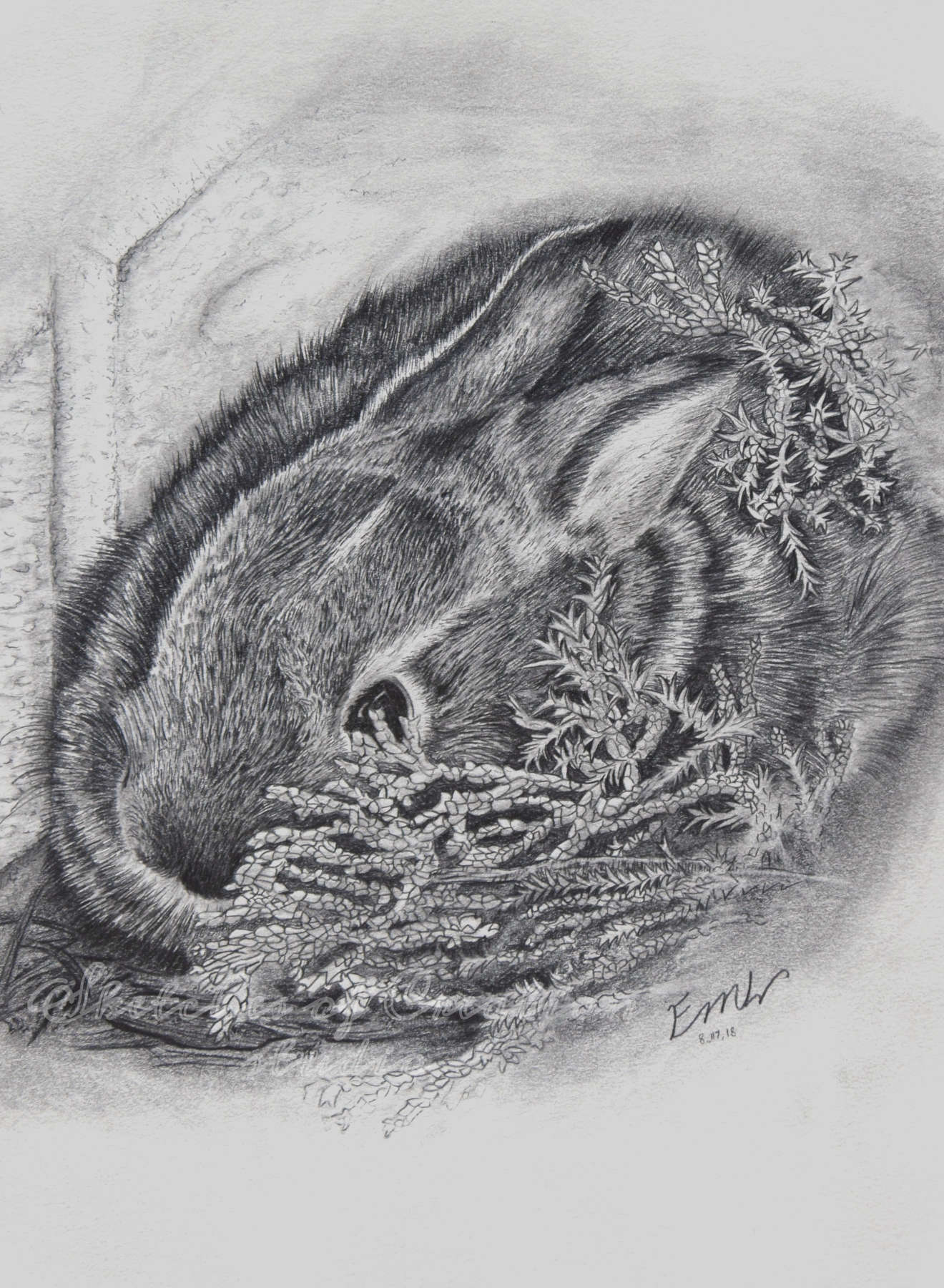 'Hiding' a drawing of a baby bunny. 6x8 inches. Completed August 2018
