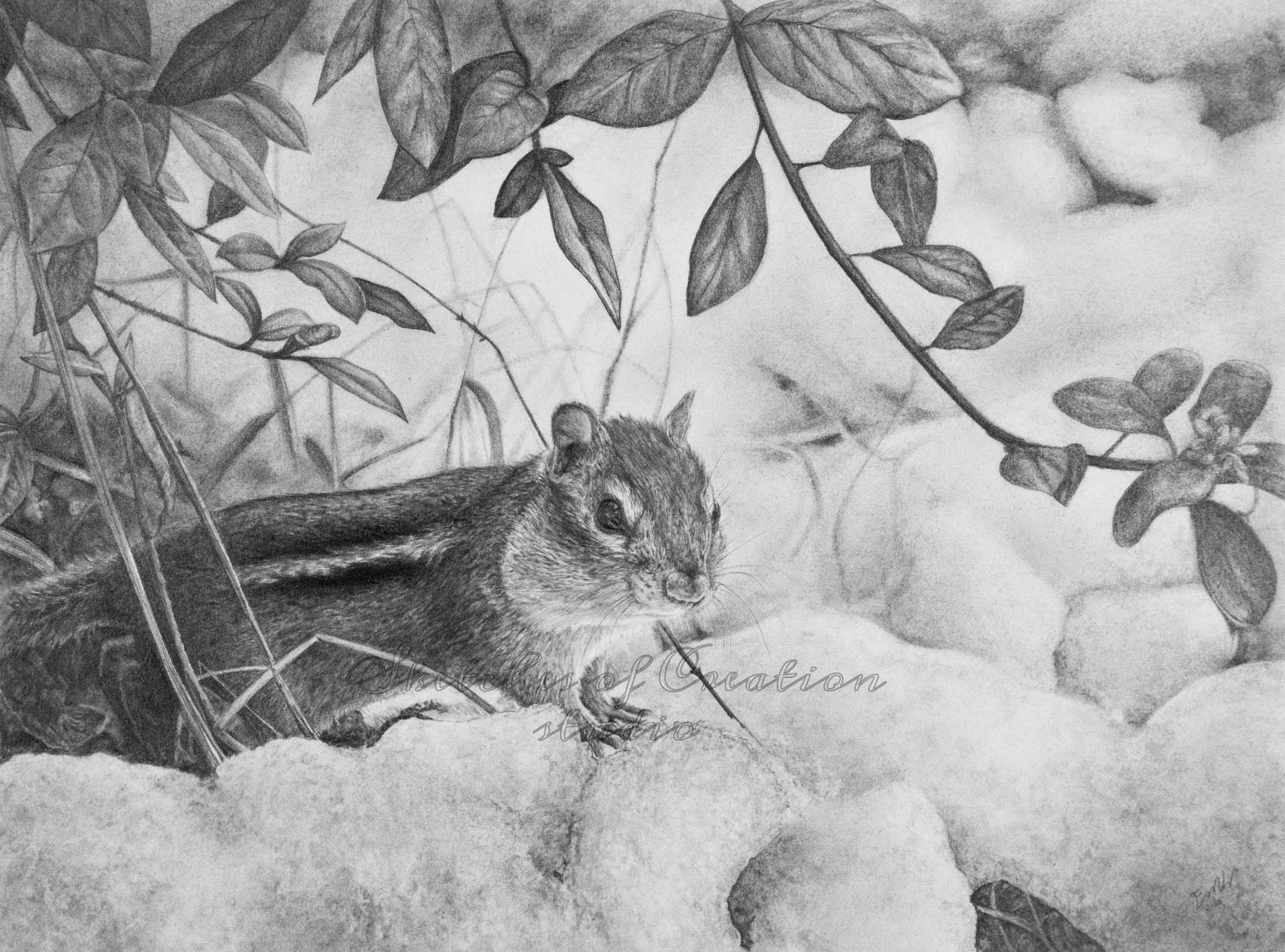 'Into the Snow' a drawing of a Chipmunk looking out from under a bush in the snow. 9x12 inches. Completed August 2020