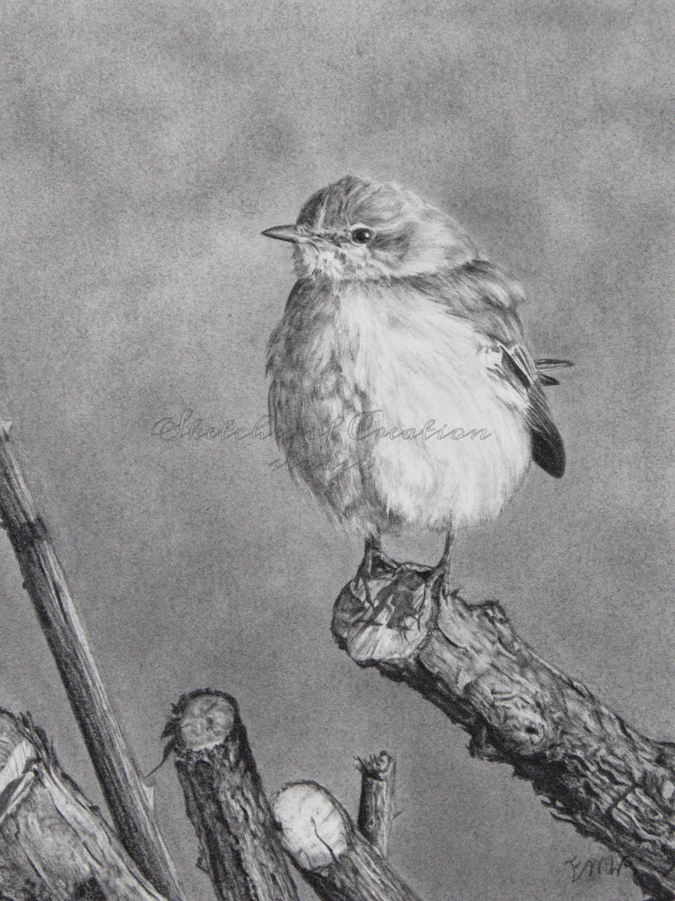 'Perching' a drawing of a Mockingbird perched atop a cut branch. 6x8 inches. Completed July 2020