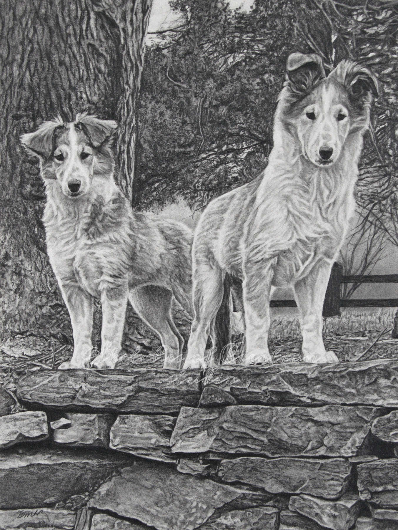 'Poppy and Zeus' a drawing of two dogs. 9x12 inches. Completed May 2020