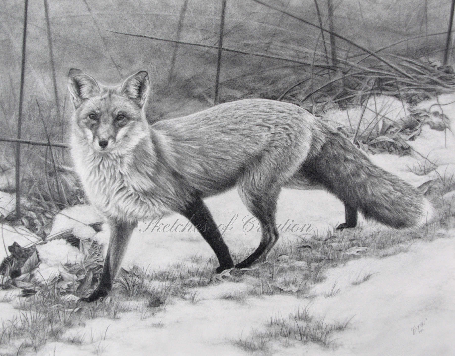 'Roam' a drawing of a fox in the snow. 11x14 inches. Completed November 2020
