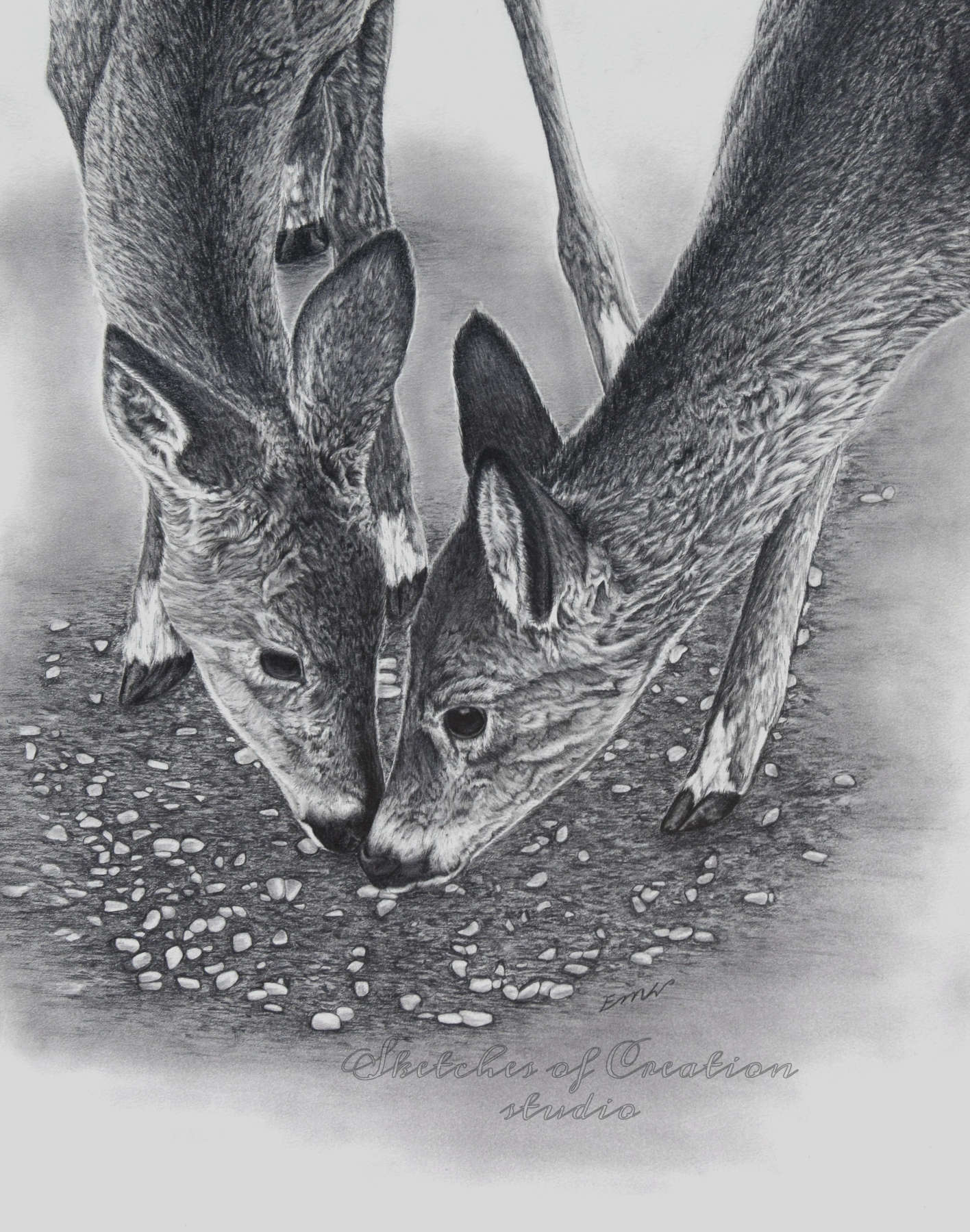 'Siblings' a drawing of two young deer. 11x14 inches. Completed June 2019