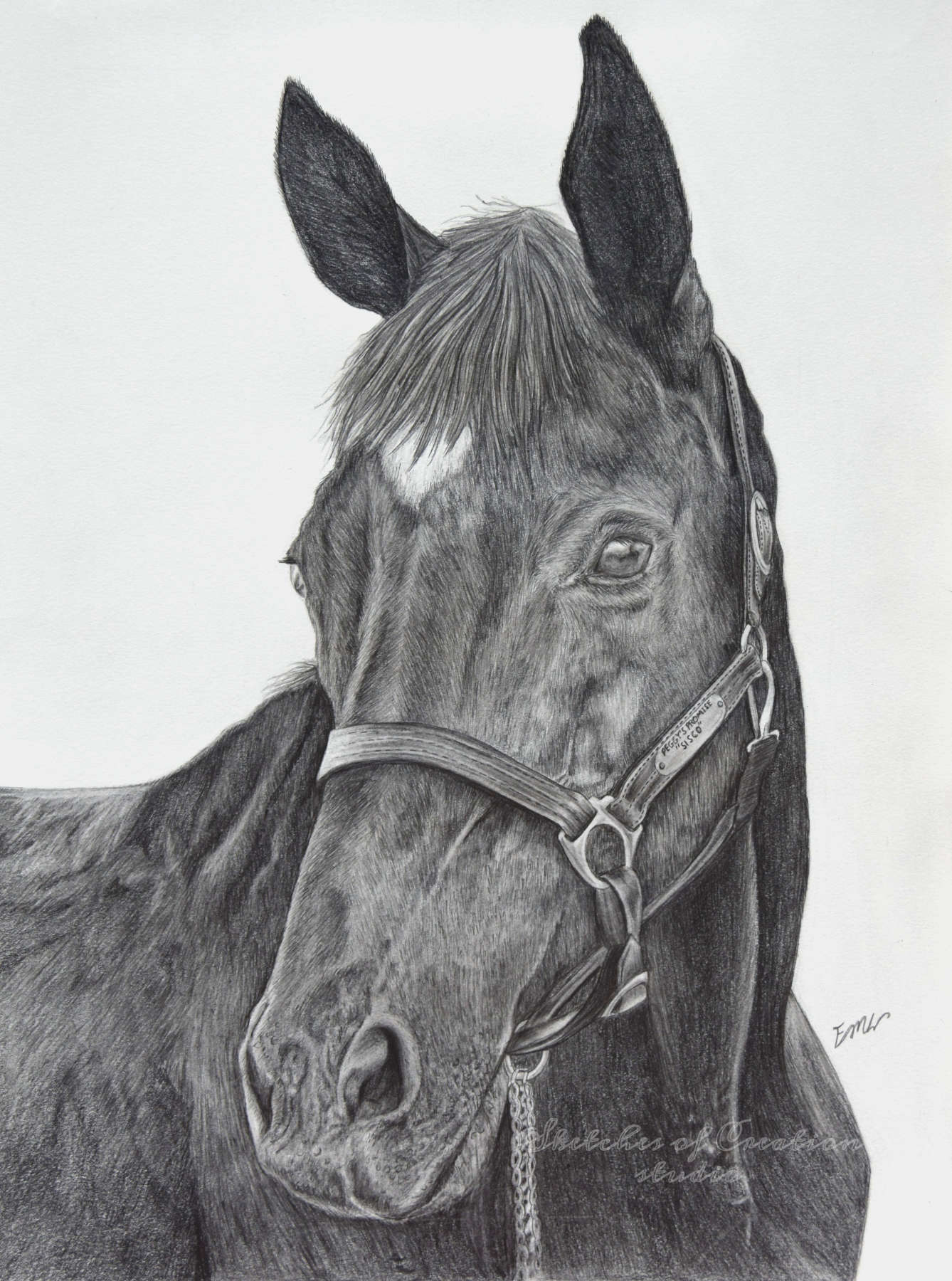 'Sisco' a drawing of a horse. 9x12 inches. Completed September 2018