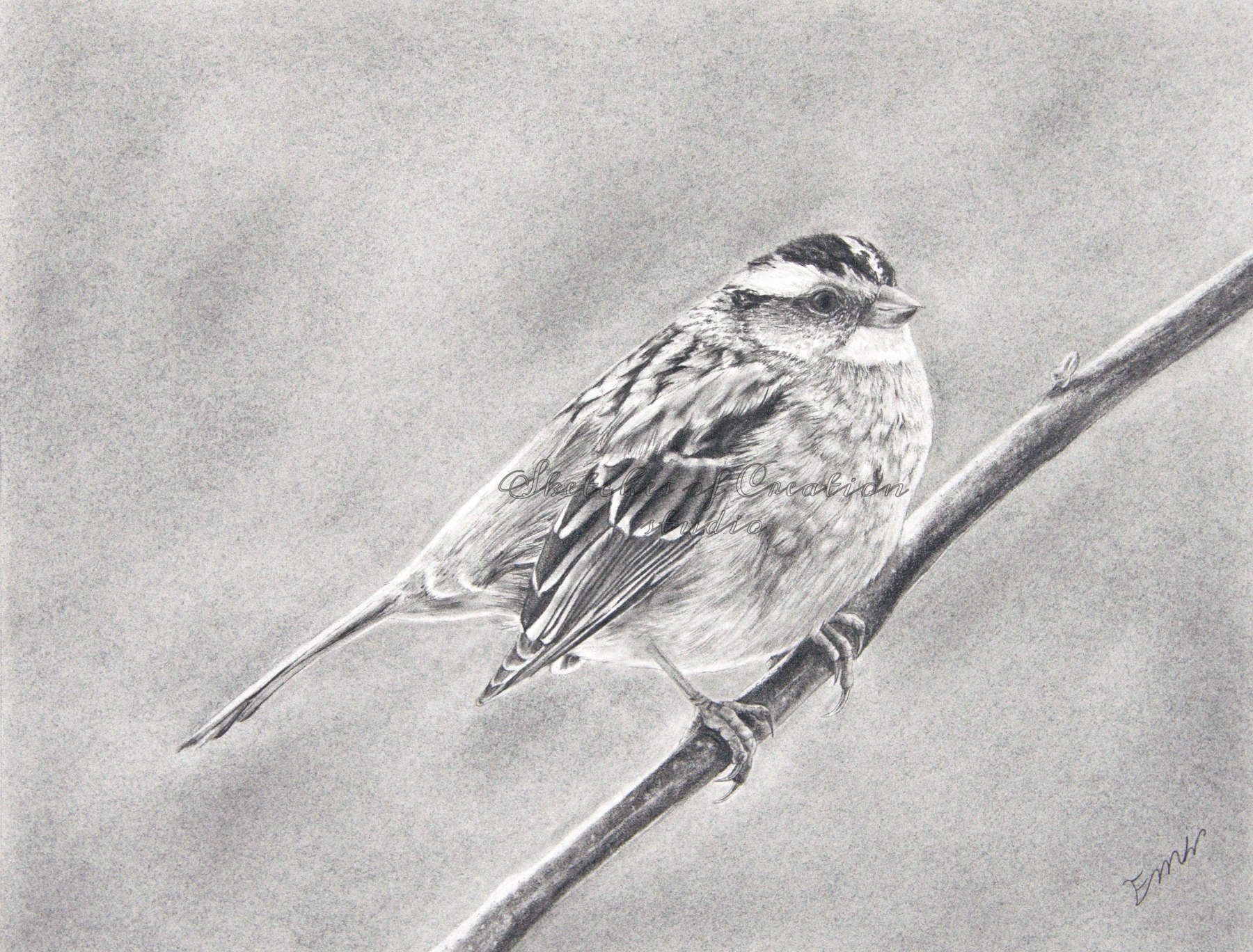 'Sparrow' a drawing of a white-throated sparrow. 8x10 inches. Completed April 2020