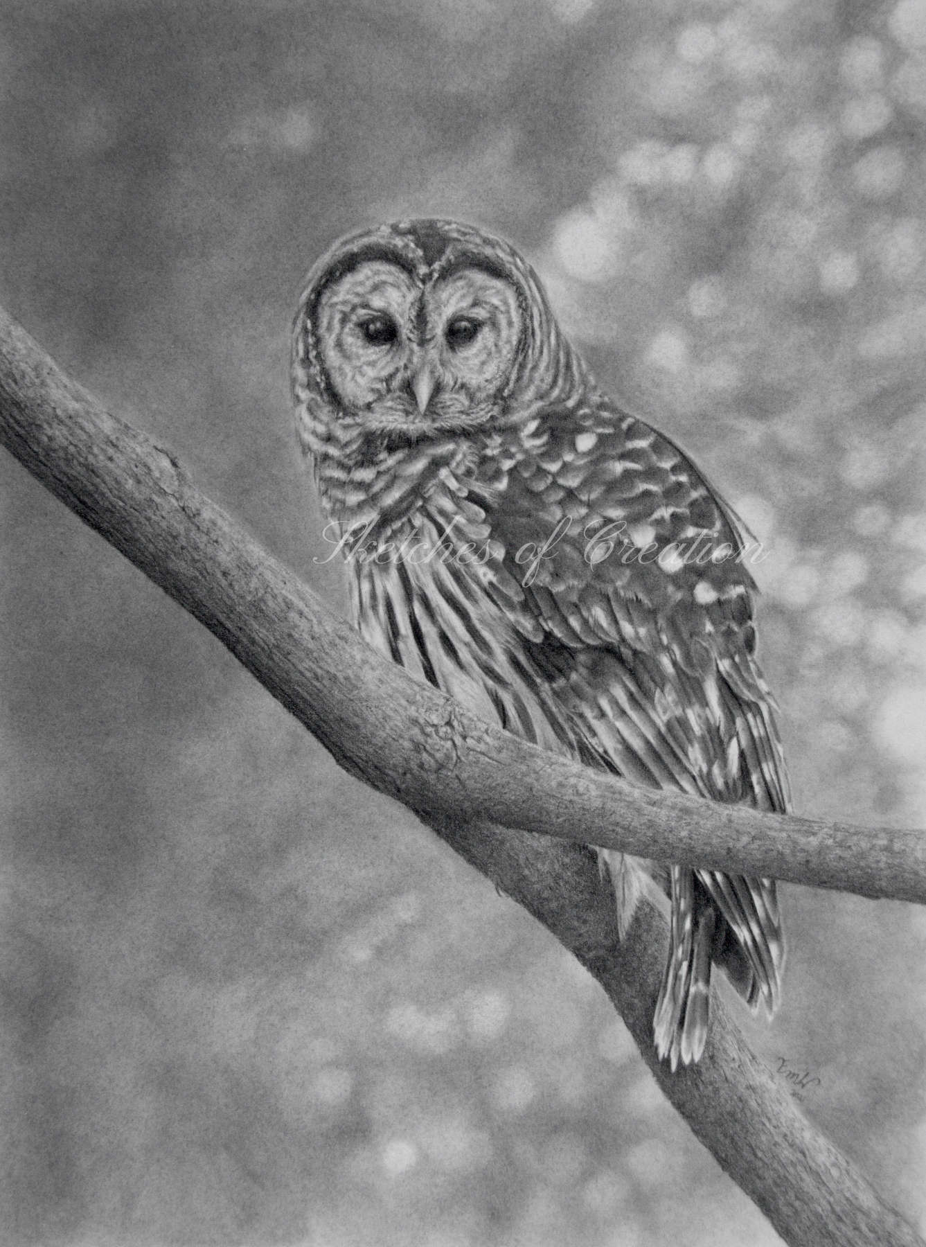 'Barred Owl' a drawing of a Barred Owl on a branch. approximately 9x12 inches plus deckled edge. Completed March 2021