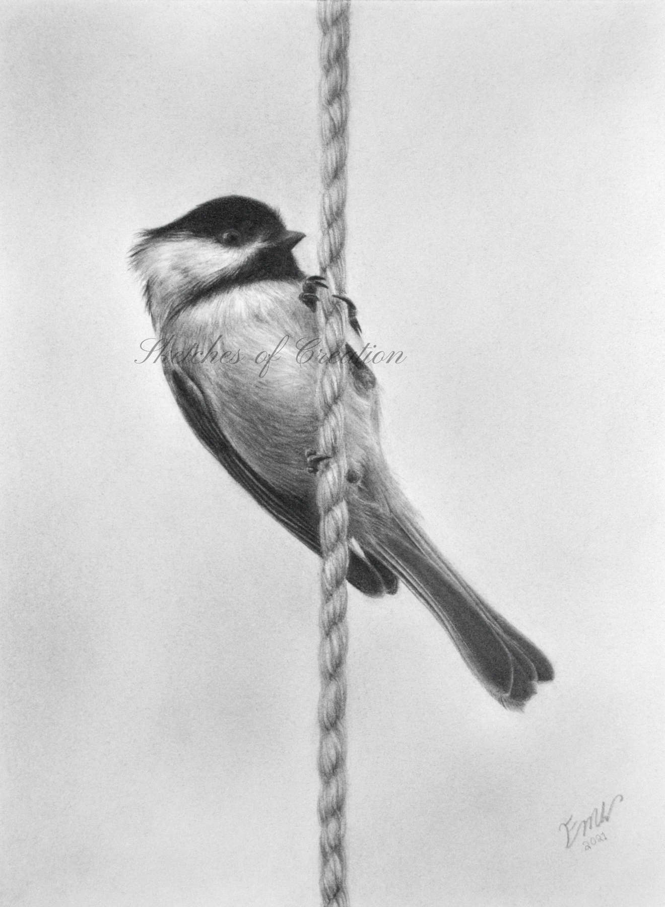 'Chickadee' a drawing of a Chickadee on a rope. approximately 6x8 inches. Completed March 2021