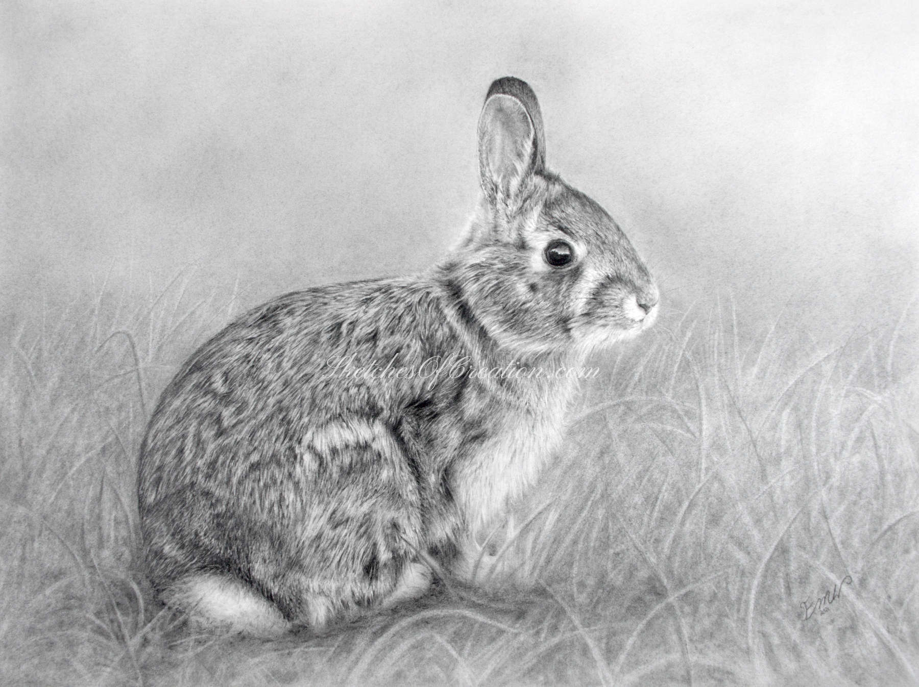 'Rabbit' a drawing of a Rabbit. approximately 9x12 inches. Completed April 2021