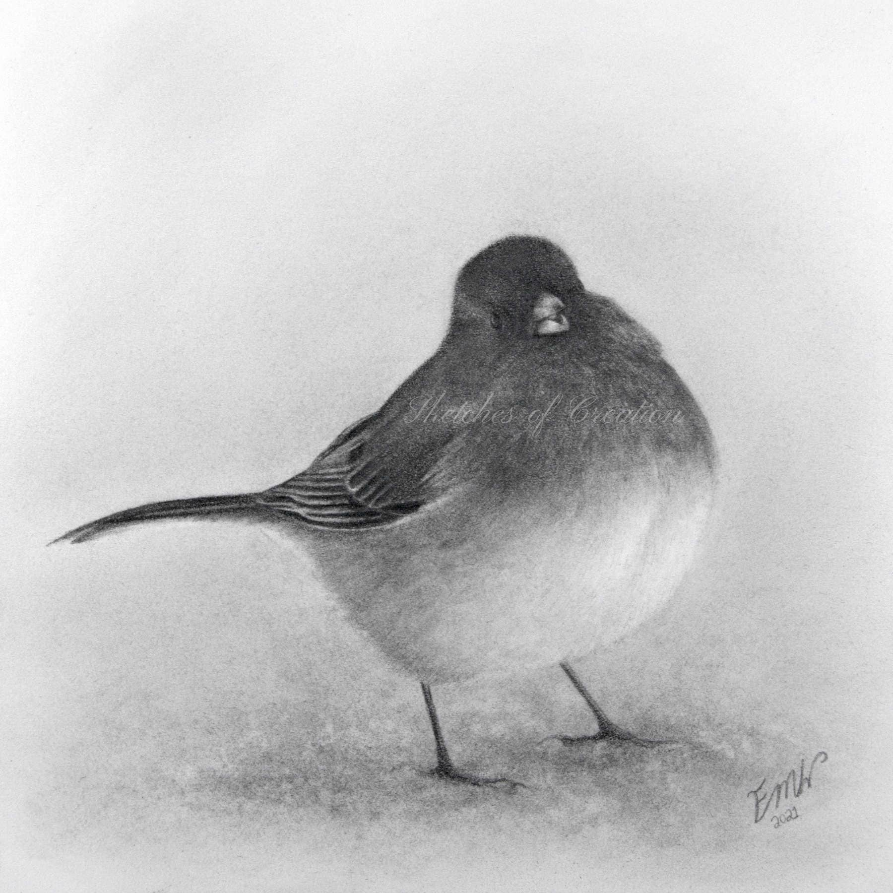 'Junco' a drawing of a Dark-eyed Junco. approximately 5x5 inches. Completed April 2021