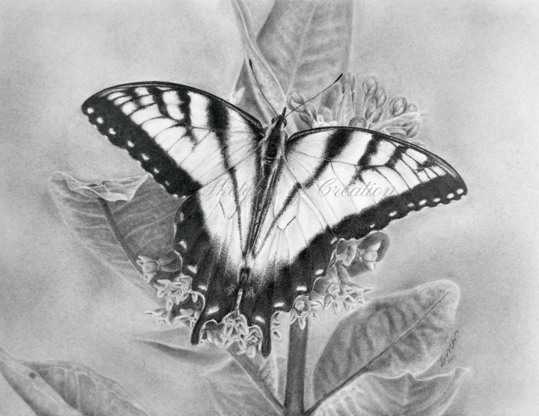 'Eastern Tiger Swallowtail' a drawing of a butterfly. approximately 6x8 inches plus deckled edge. Completed May 2021