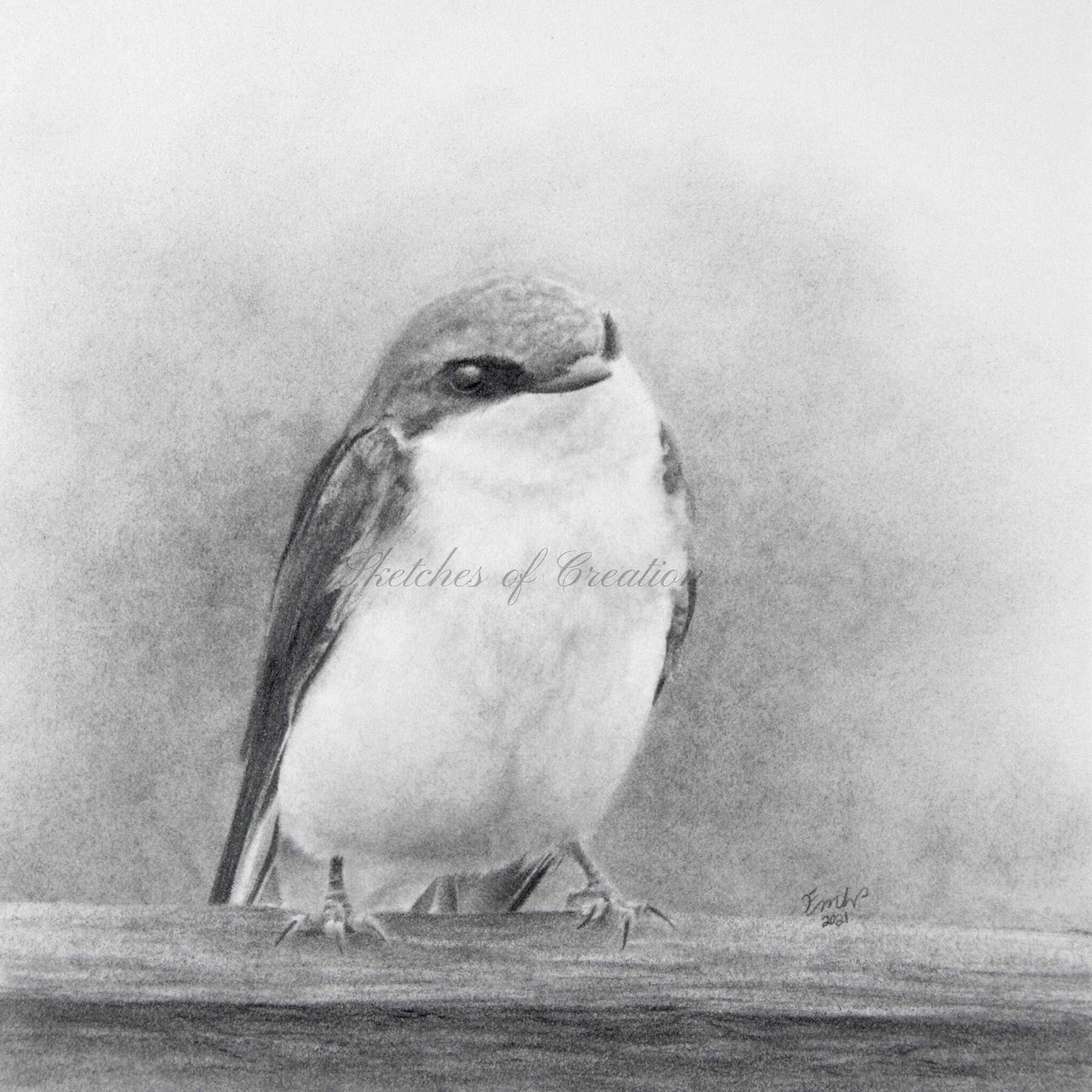 'Tree Swallow' a drawing of a Tree Swallow. approximately 5x5 inches. Completed April 2021