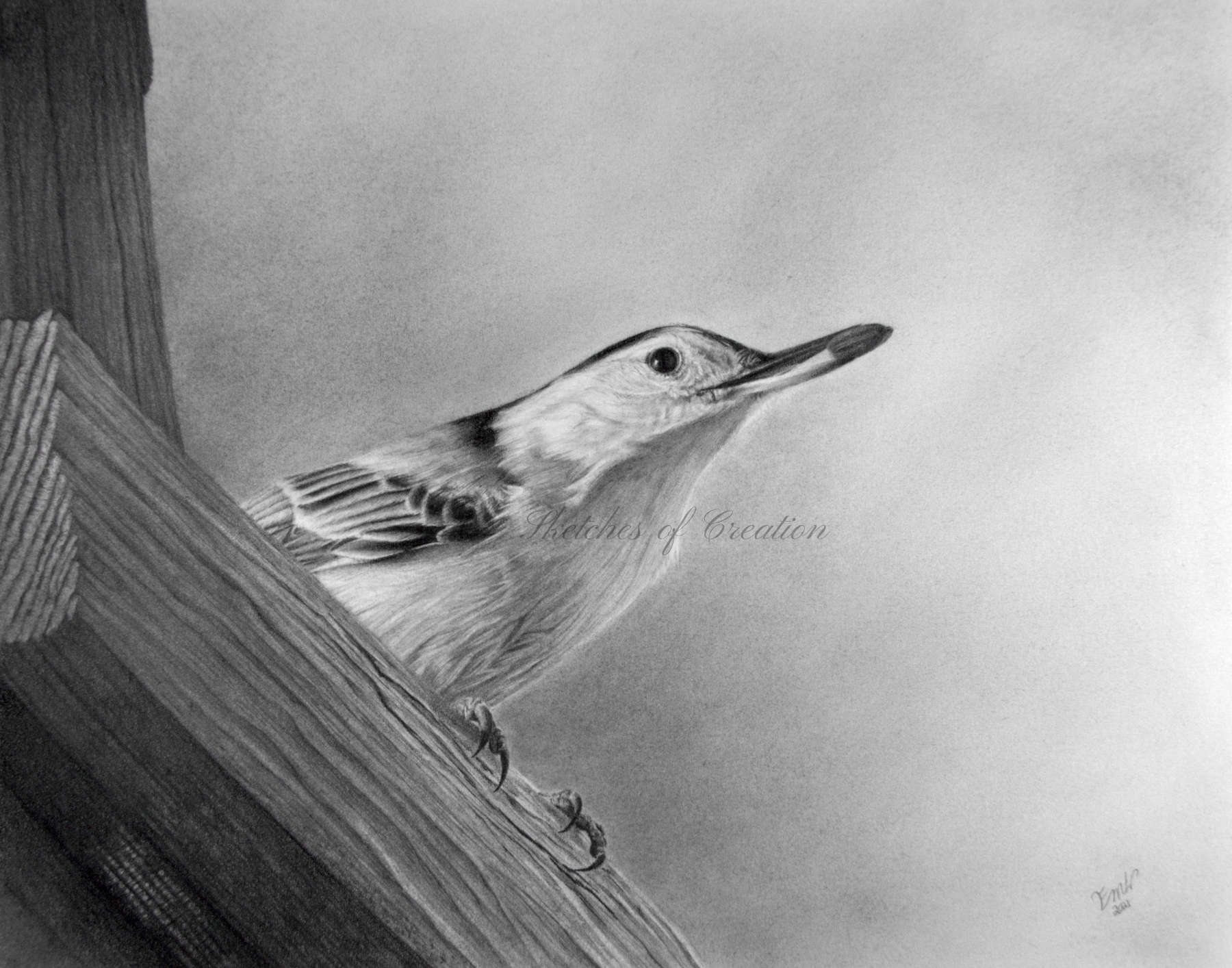 'Nuthatch' a drawing of a Nuthatch on a birdfeeder with a seed in his beak. approximately 8x10 inches plus deckled edge. Completed June 2021