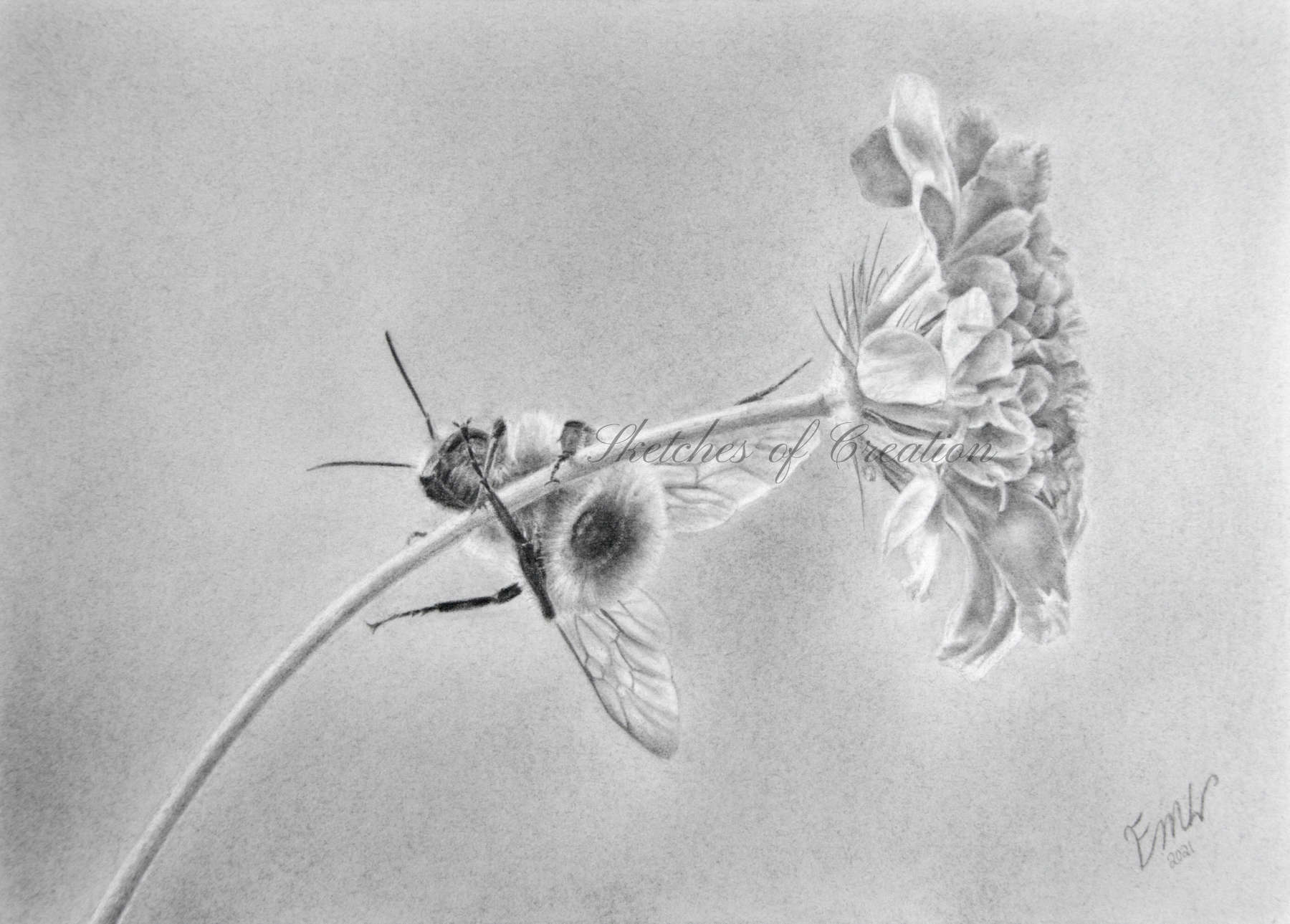 'Hang On!' a drawing of a bumble bee hanging from a flower stem. Approximately 5x7 inches + deckled edge