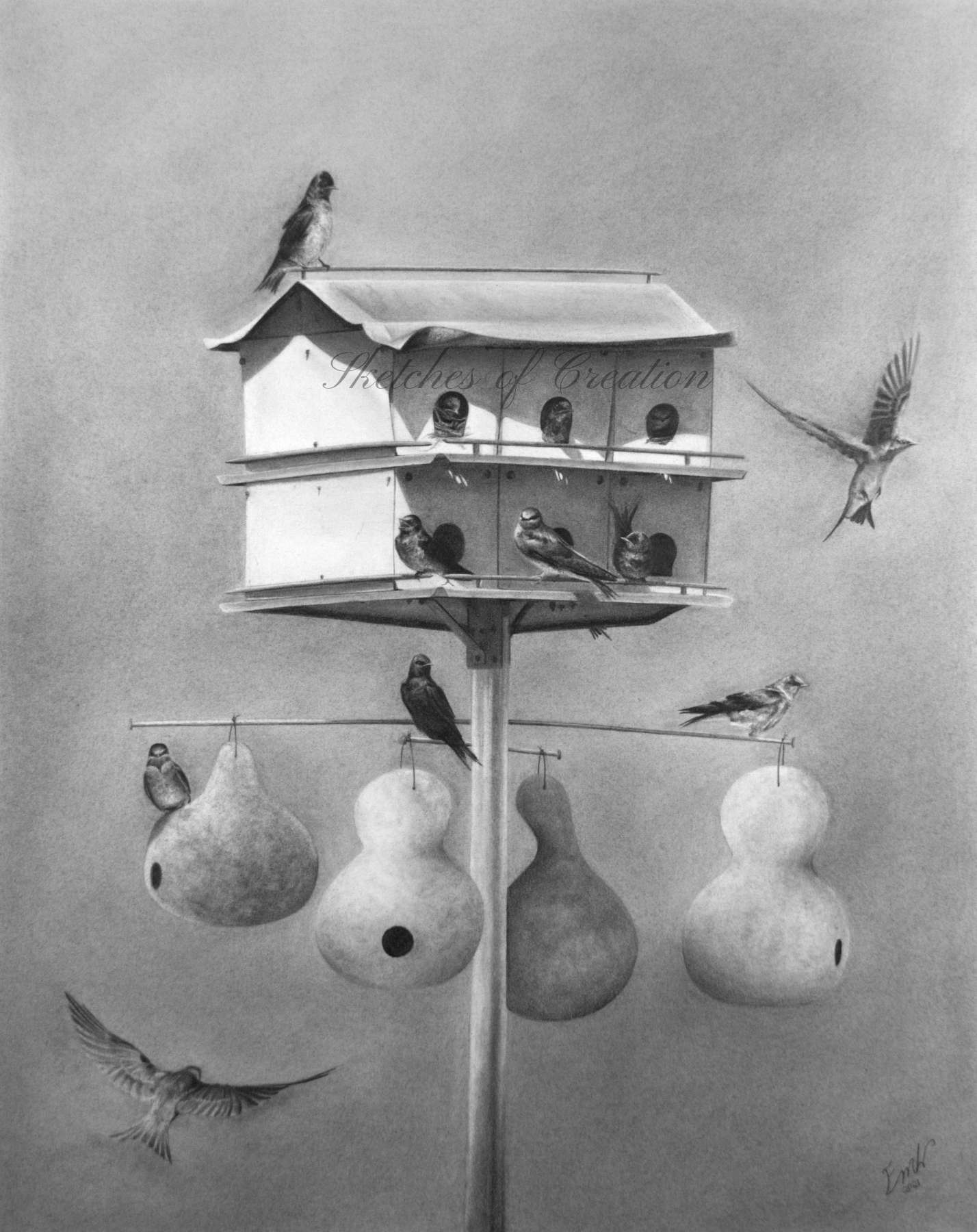 'Purple Martins' a drawing of 12 purple martins in and around a purple martin housing complex. Completed August 2021