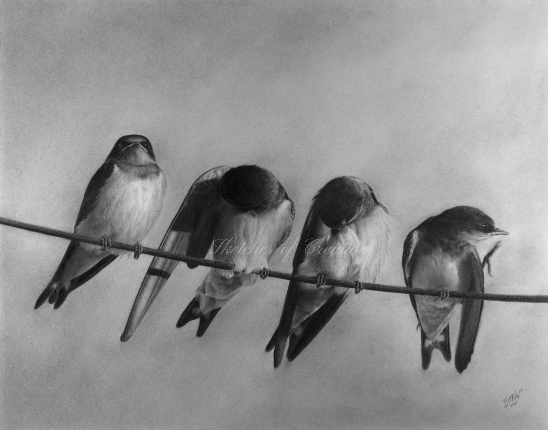 A drawing of four Barn Swallows sitting on a line