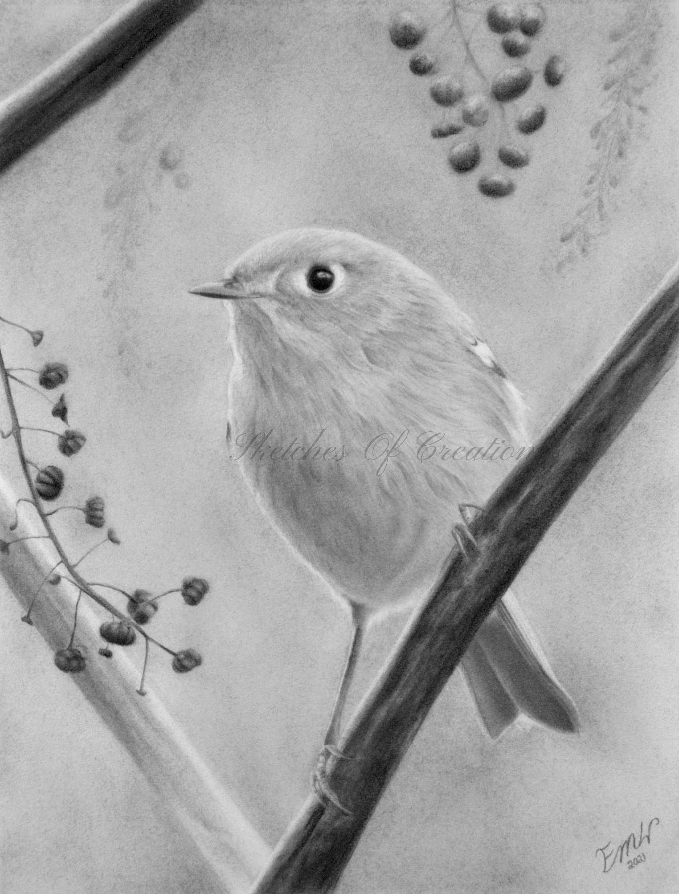 A drawing of a Ruby-crowned Kinglet